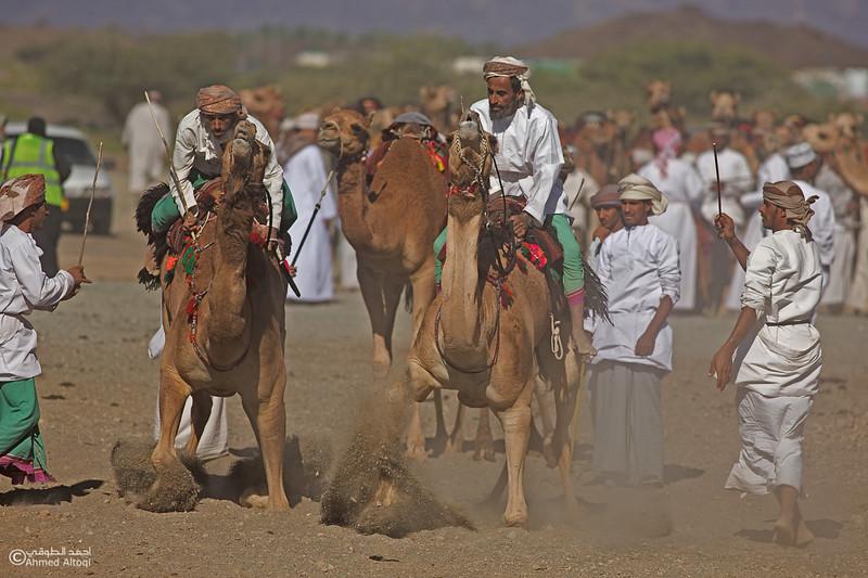 camels (15)- Camel Race.jpg