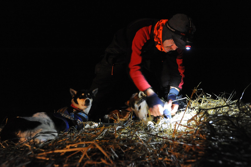 . Allen Moore puts booties on his dog team before leaving the village of Nikolai, Alaska during the Iditarod Trail Sled Dog Race, Tuesday, March 5, 2013. (AP Photo/Anchorage Daily News, Bill Roth)