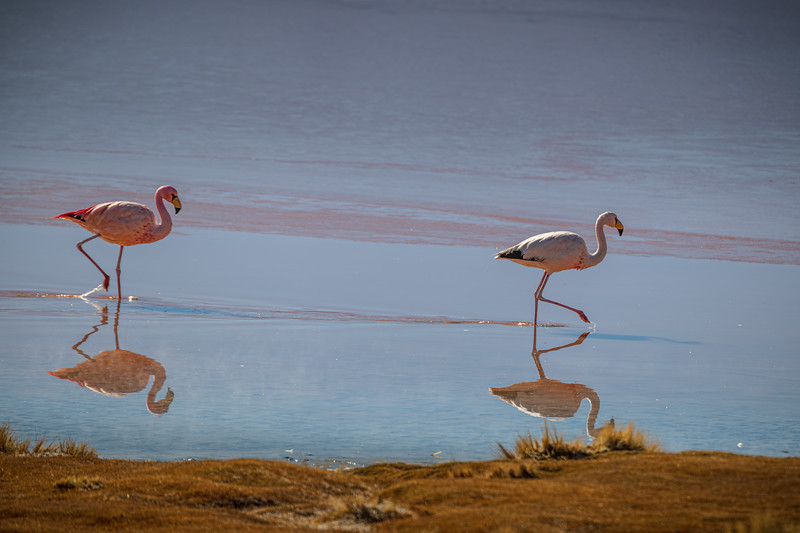 Salt Flats tour - Laguna Colorada - Red Lagoon-2516.jpg