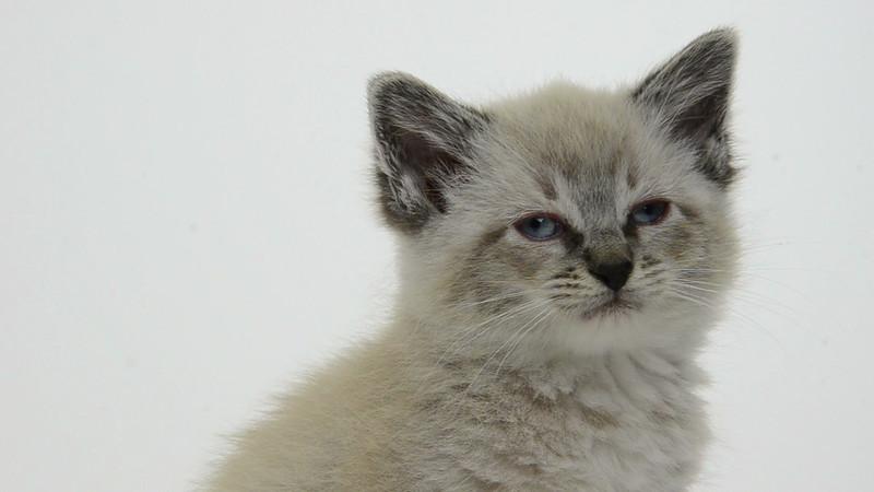 Kitten_03_IS_HD.mov