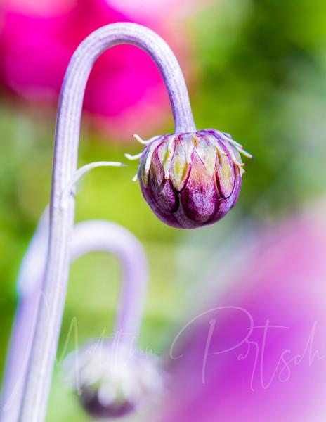 flowers_193.jpg