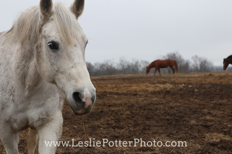 Horses in a Muddy Pasture