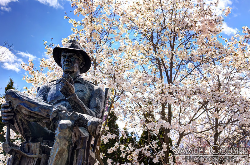 The John Ford statue in front of a blooming magnolia tree.