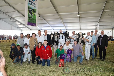 Mexico National Holstein Cows 2017