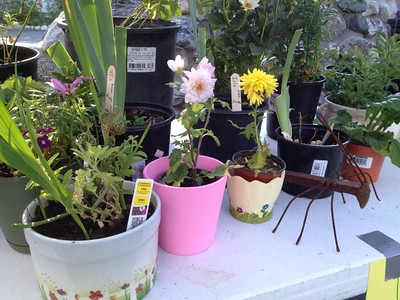 Garden Extravaganza
