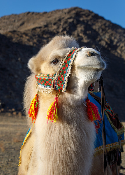 Mongolia_1018_PSokol-1882.jpg