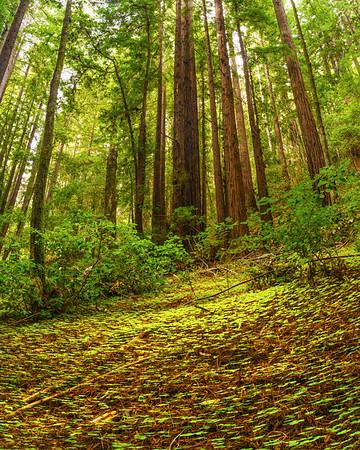 Portola Redwoods State Park 12-31-17