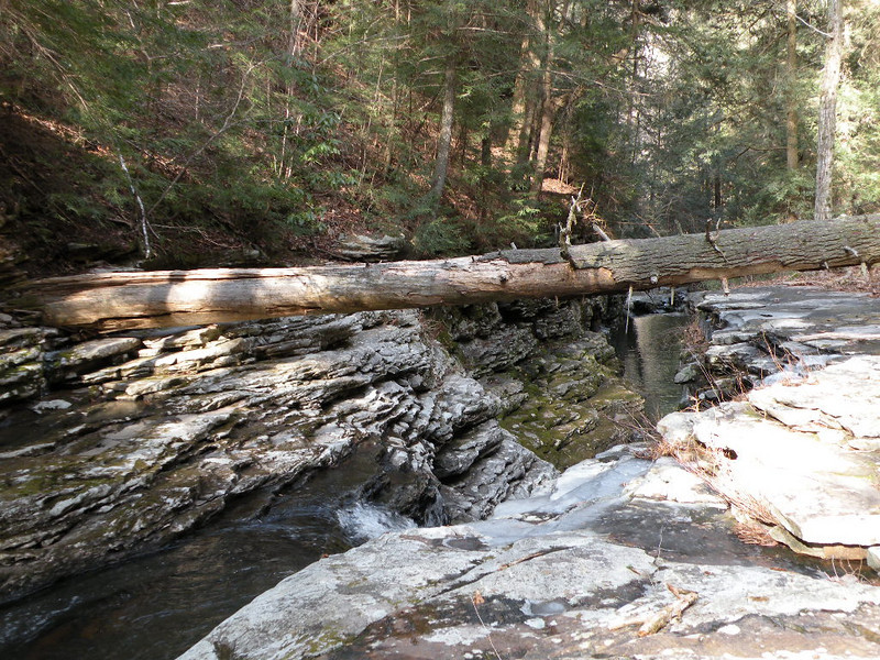 Huge log has fallen over the creek. Anyone feel like using it for a bridge?
