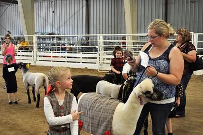 Lead Line and Dress a Sheep