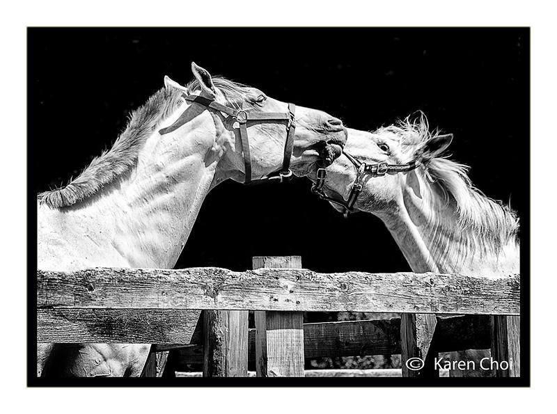 2 horses black and white sm.jpg