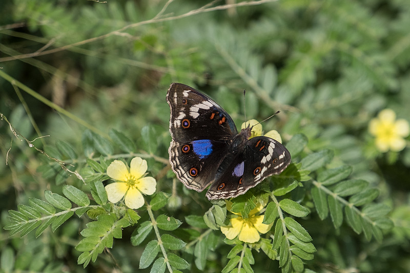 Butterfly 1702272111.jpg