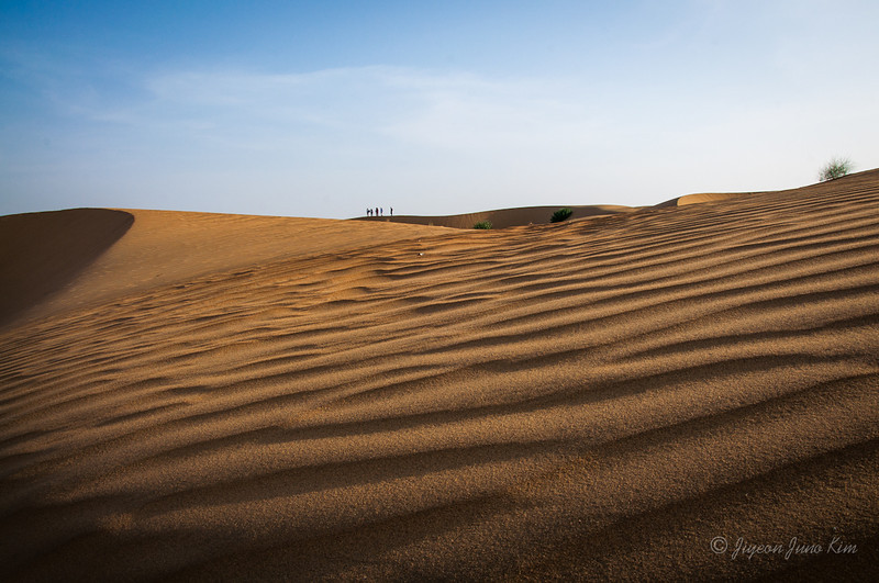 India-Rajasthan-Camel-0026.jpg