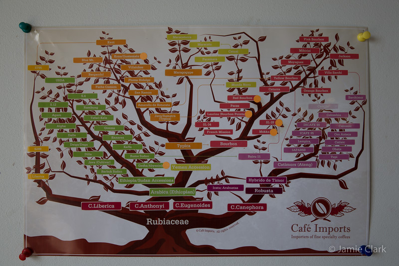 Coffee Genealogy @ Coffee Farms @ Kona Side of the Big Island, Hawaii, April 2016