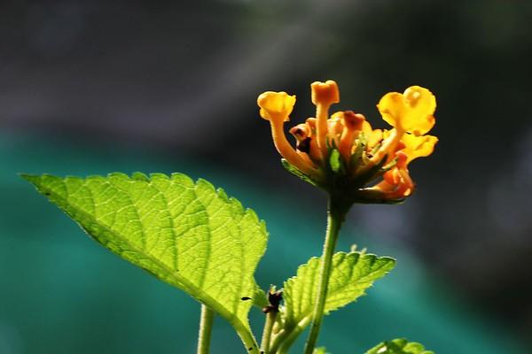 Butterfly Garden KL