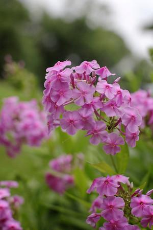 My Garden '13