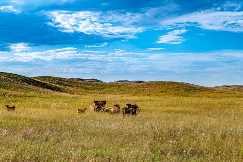 Horn Ranch-1304.jpg