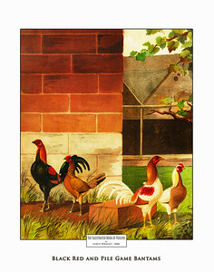 Book of Poultry  1889