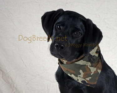 Camp Bow Wow Livermore - Jake Wright