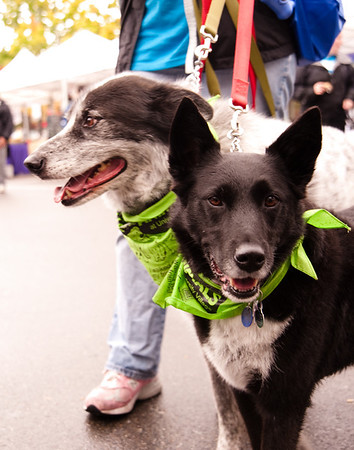Walk for the Animals - Collateral Photos