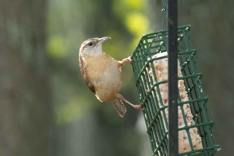 birdfeeder-7162.jpg