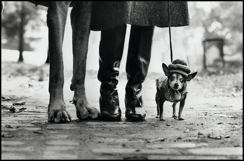Elliott Erwitt / Magnum Photos. USA. New York. 1974