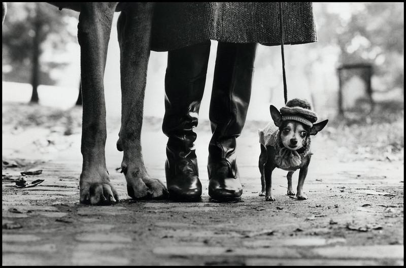 Elliott Erwitt / Magnum Photos. USA. New York. 1974