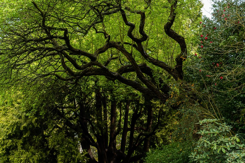 Pratt_Seattle Spring-2.jpg