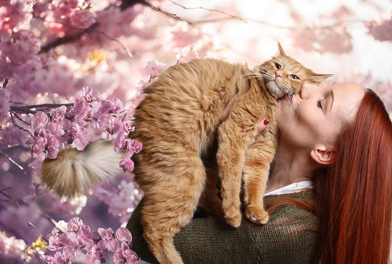 Orange-cat-5.jpg