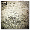 008-Animals(2)