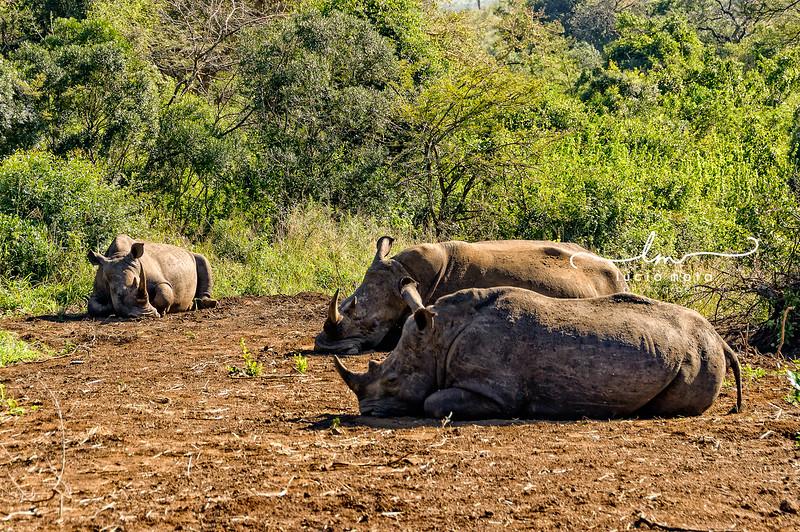 SOUTH AFRICA-75.jpg