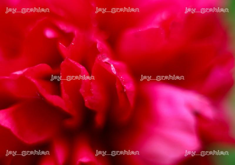 20090524_Ramble014.JPG