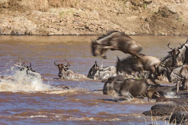 The Wildebeest Migration Gallery
