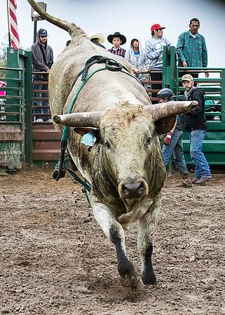 WCJBR & Open Bull Riding - Feb. 22
