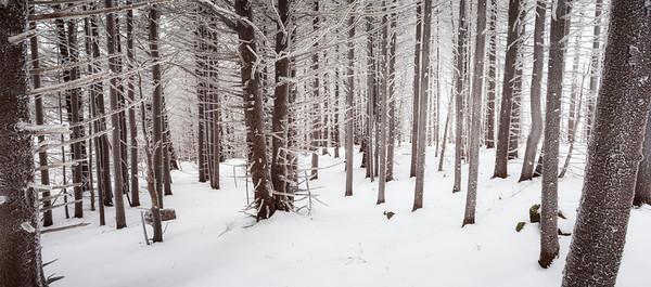 Roan Mountain Winter