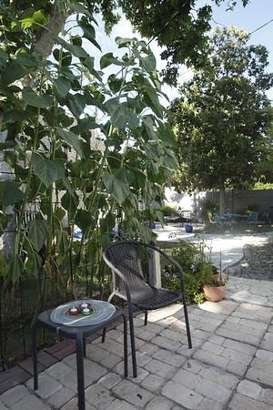 Backyard030714