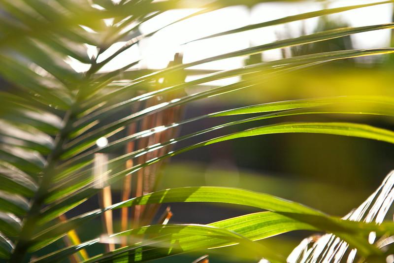 palmsRGB.jpg