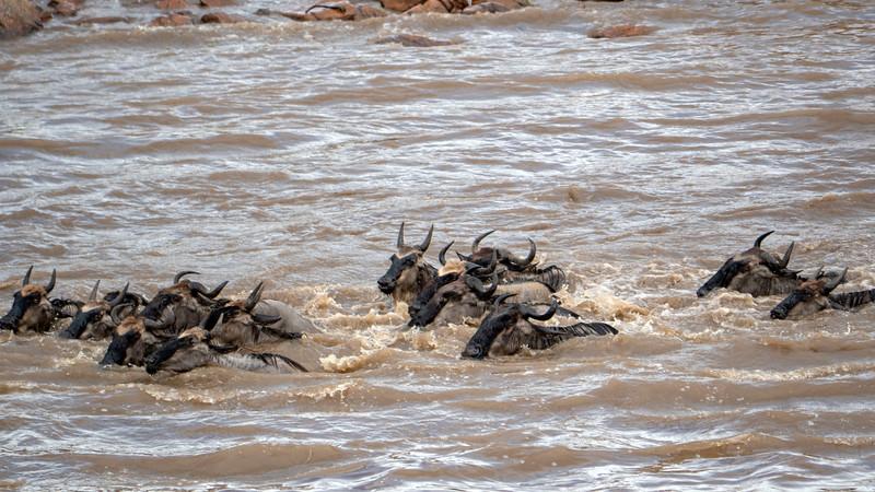 Tanzania-Serengeti-National-Park-Safari-Great-Migration-Wildebeest-05.jpg