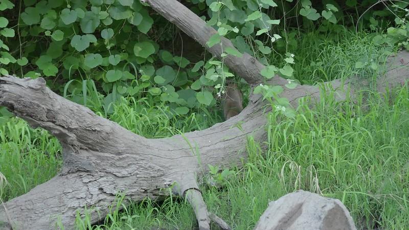 190711-Big Chico Creek July-20473.mp4