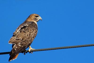 Birding Attwater Prairie Chicken NWR