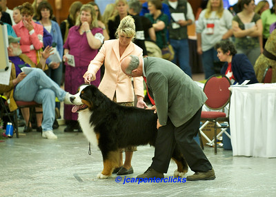 Best of Breed Competition - Group I