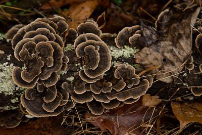 Mushrooms, Lichen  & Fungi