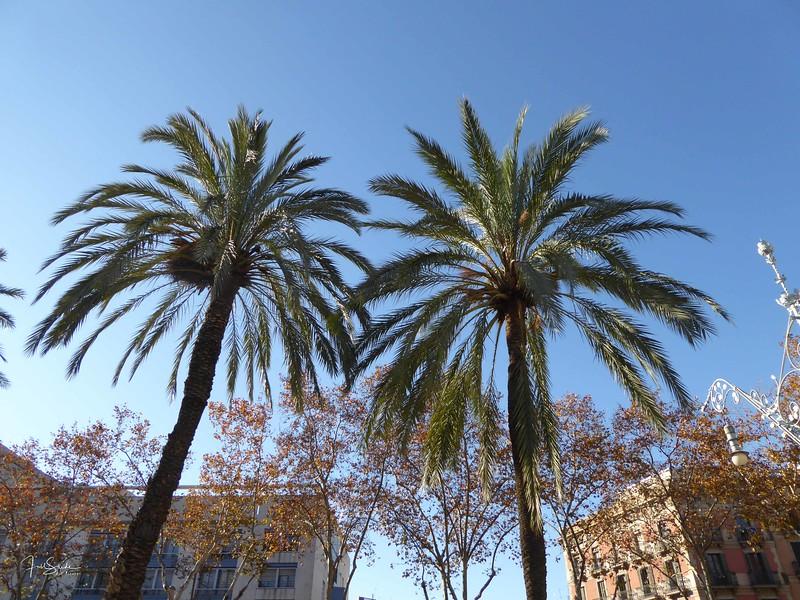 Barcelona December 2014-39.jpg
