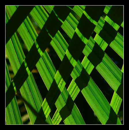 Leaves Abstract