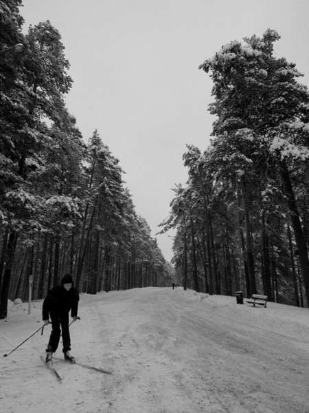 tampere forest skiier2.jpg