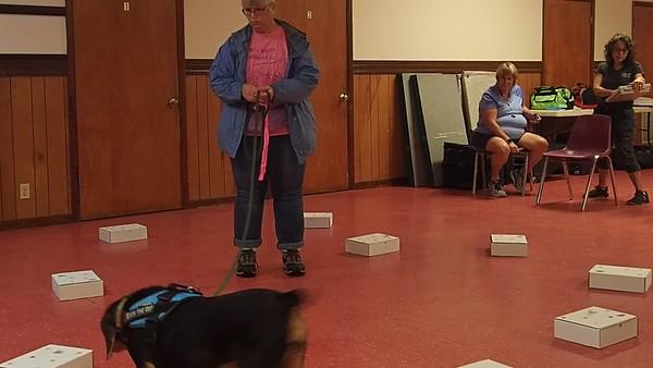 Performance Scent Dog 6/29/119