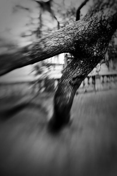 Lensbaby_tree_20091105_203.jpg
