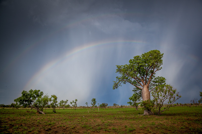 A double rainbow over a boab tree (Storm Chasing in Northern Australia for BBC Wonders of The Monsoon.)