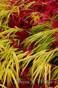 Garden Textures, Mono & Duo colored images