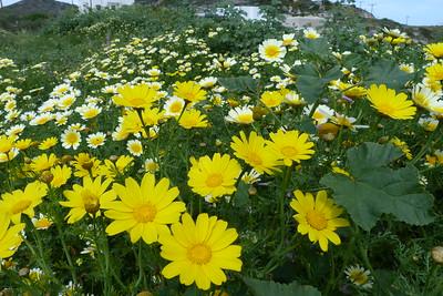 Apr 12 - Spring Flowers