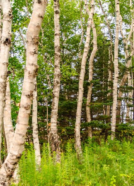 Acadia Nat'l Park-Terry's - July 2017-110.jpg